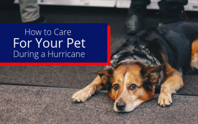How to Care For Your Pet During a Hurricane